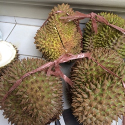 Davao Durian - some of the best I've tried